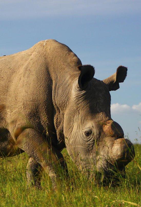 Animales en peligro de extinción, una lista que crece cada año