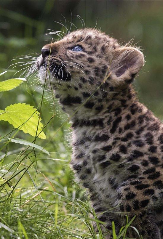 ¿Cuánto sabes sobre animales en peligro de extinción?