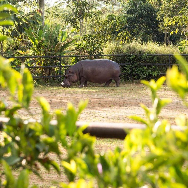 Los hipopótamos de Pablo Escobar y la megafauna del Paleoceno