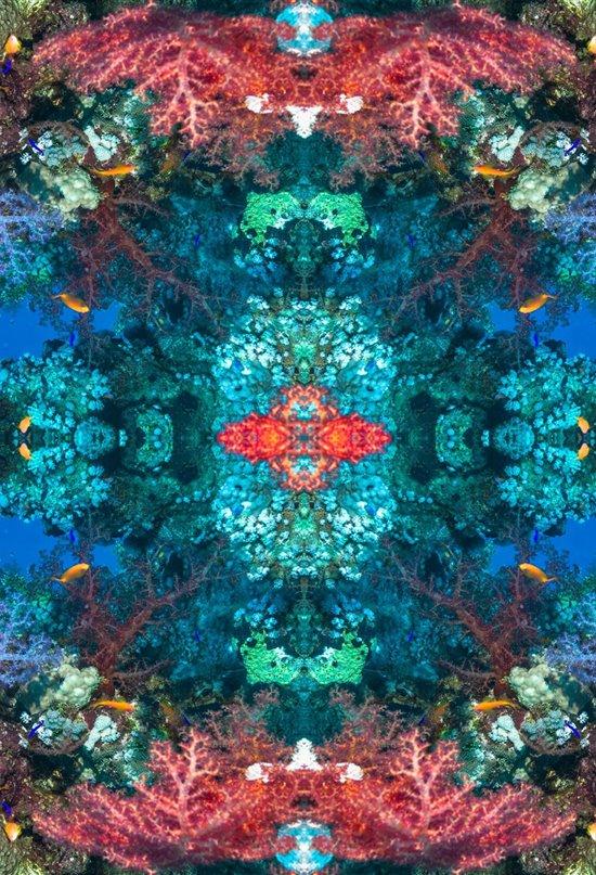 Psicodelia coralina