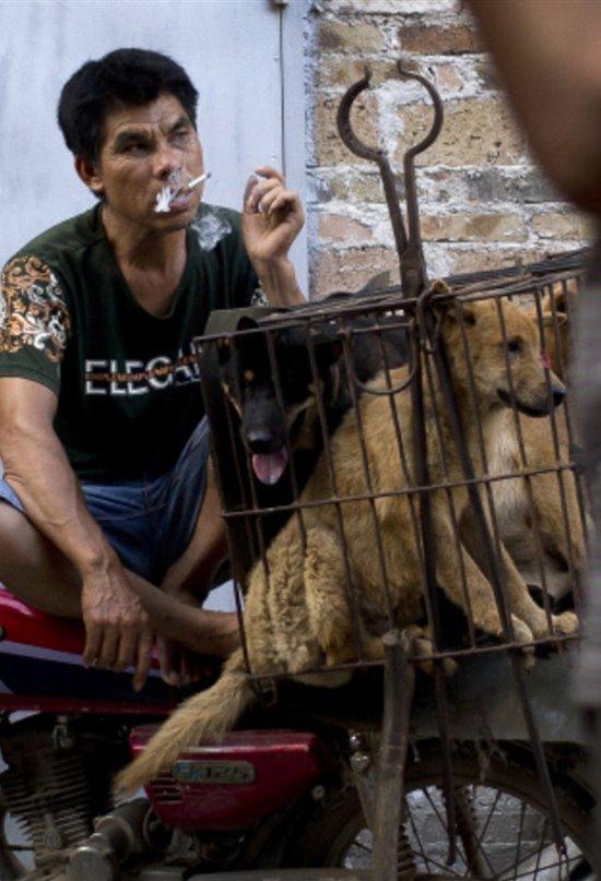 China veta el consumo de carne de perro y de gato
