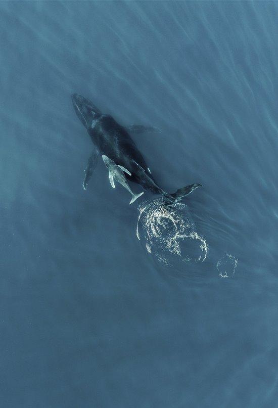 Shhhh, las ballenas duermen