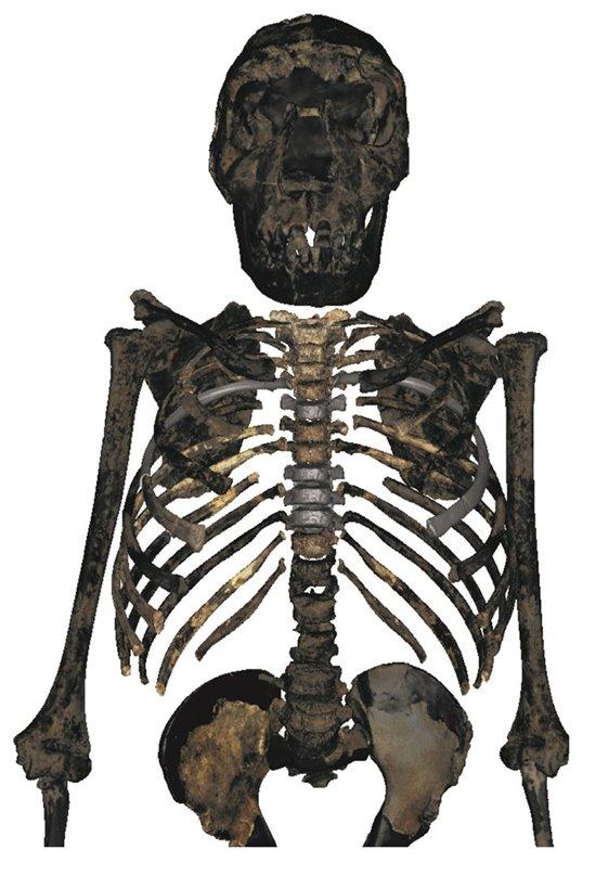 Robusto, compacto y achaparrado: la nueva imagen del Homo erectus