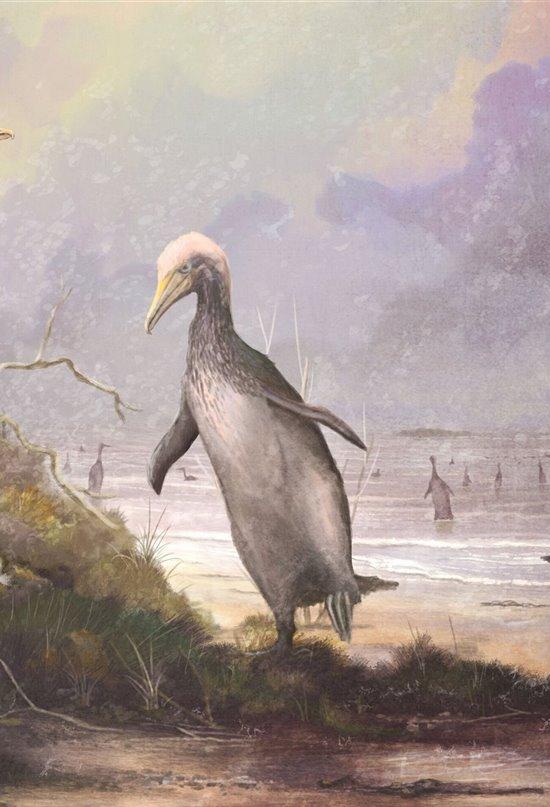 Los antiguos pingüinos gigantes ya usaban sus alas para nadar