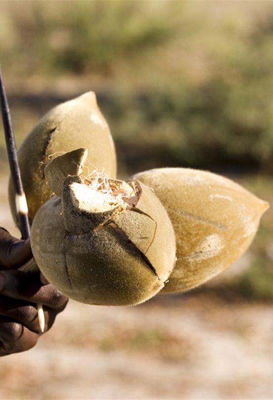 Baobab, el árbol de las vitaminas