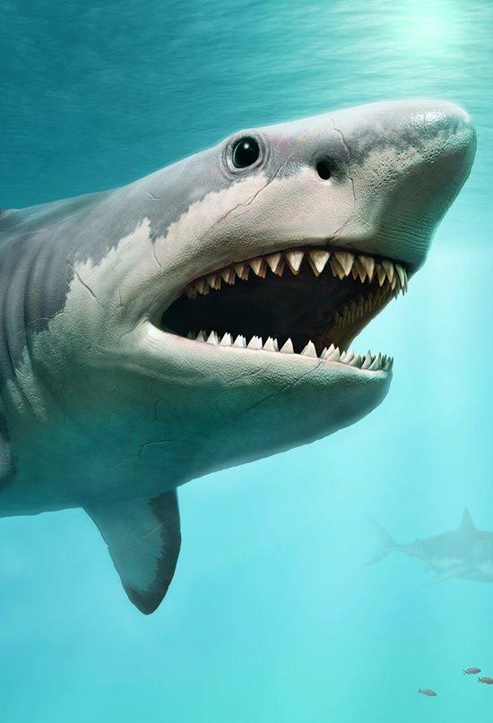 Desvelan el verdadero tamaño del tiburón Megalodon