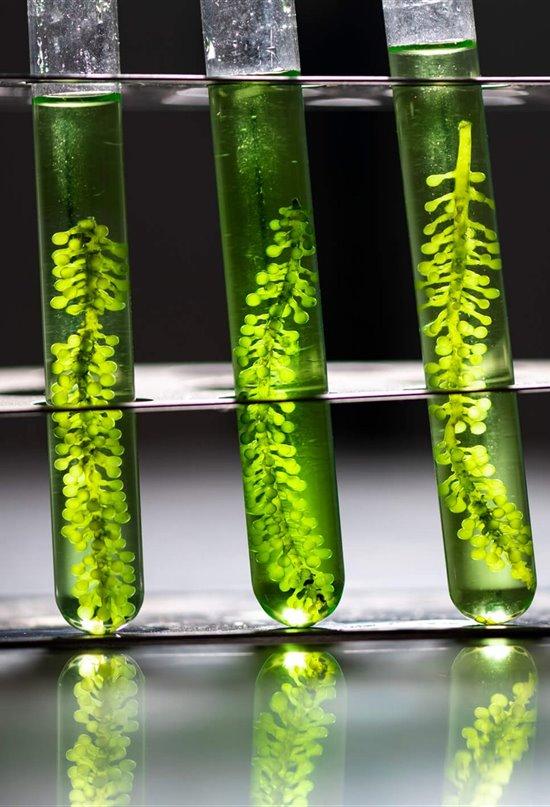 Descifrando las claves de la fotosíntesis II: ARNm, más que un código genético