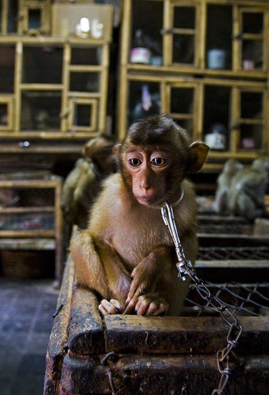 Las mejores fotografías de naturaleza del Wildlife Photographer of the Year 2020
