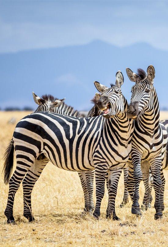 Las rayas de los animales, un mecanismo visual para escapar de los depredadores