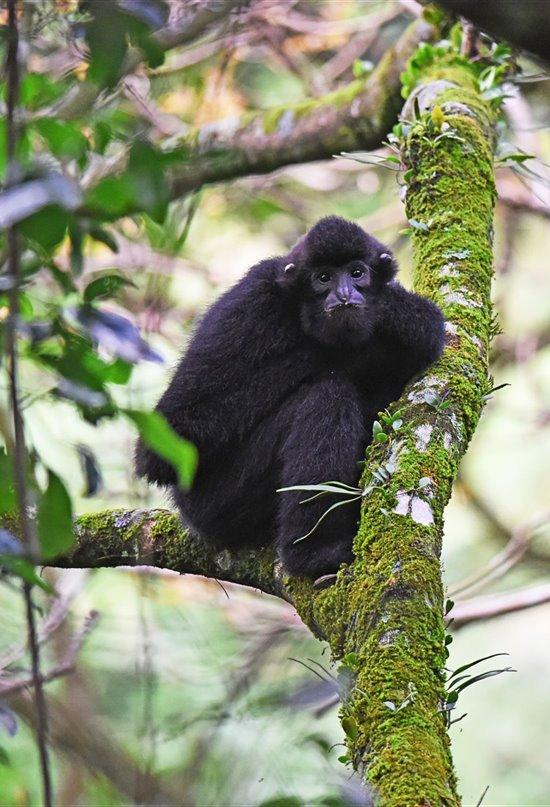Como echar (literalmente) un cable a los primates