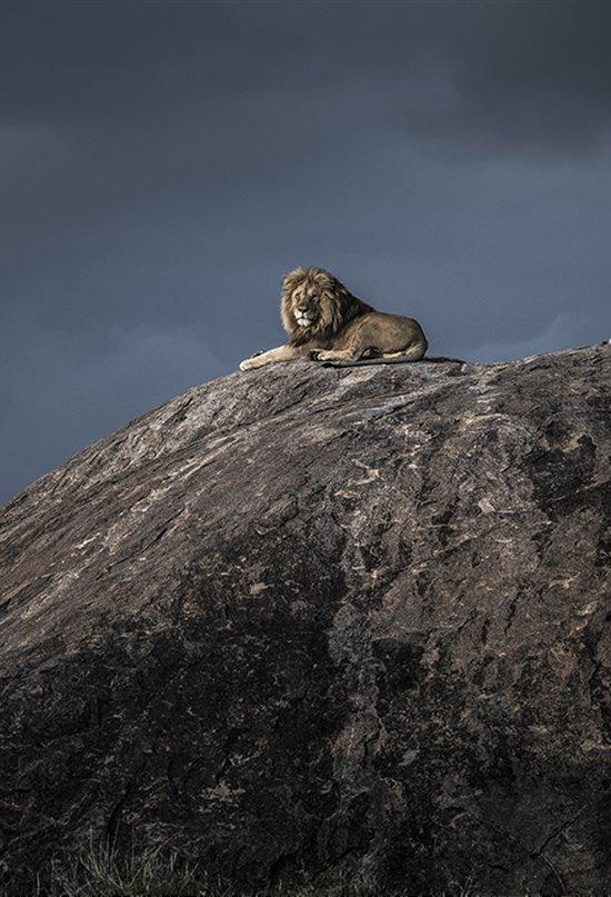 El Wildlife Photographer of the Year presenta las 25 fotos en las que el gran público es el juez