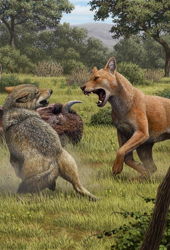 El lobo gigante fue una especie distinta al lobo gris