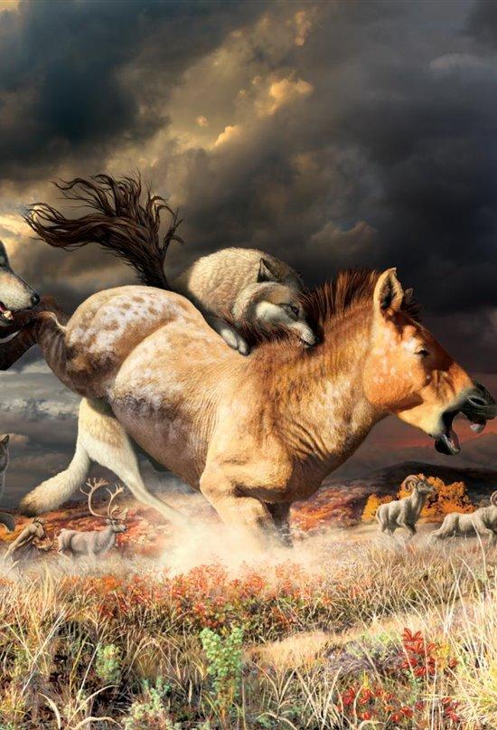 El lobo gris, un superviviente de la última Edad de Hielo
