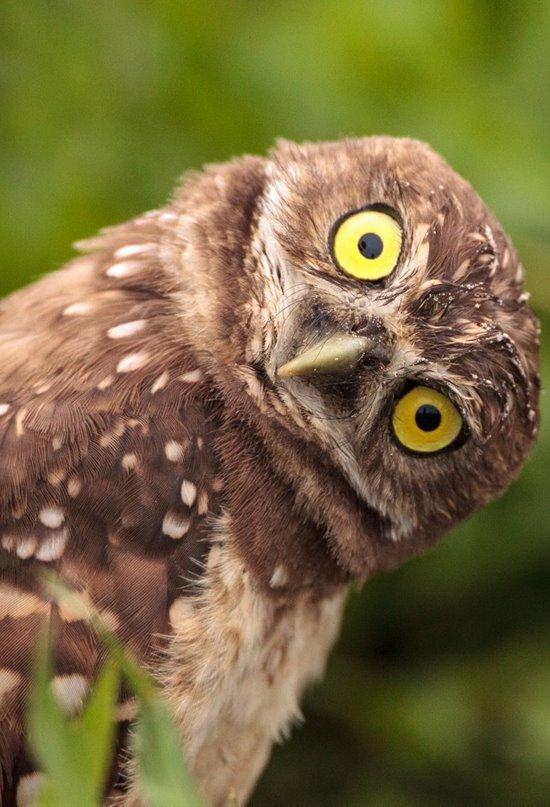 Una nueva mirada a la biodiversidad de las aves