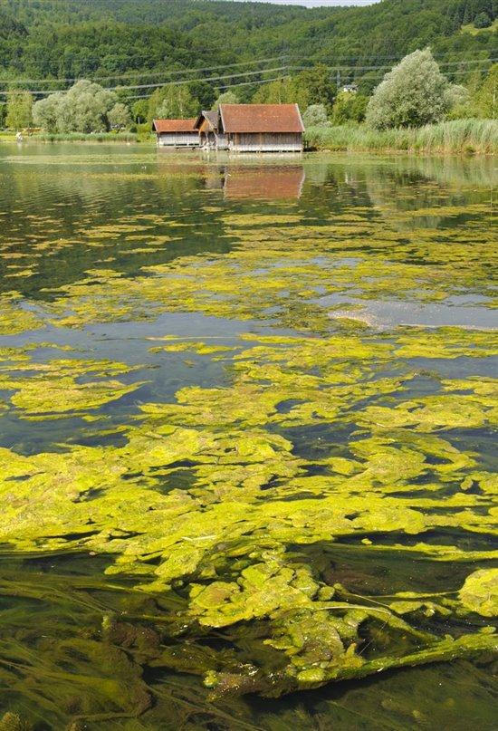 Los niveles de oxígeno de los lagos templados están en declive
