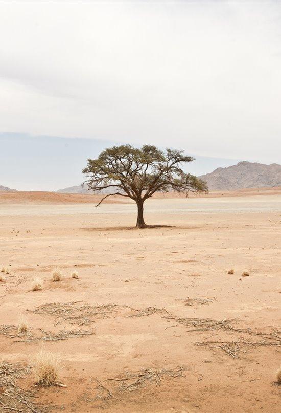 Árboles transgénicos para frenar el desierto