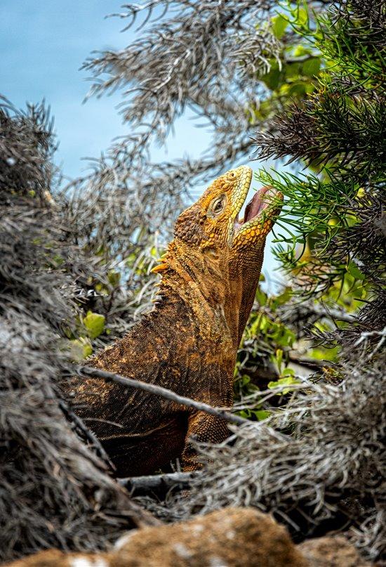 Postales desde las islas Galápagos