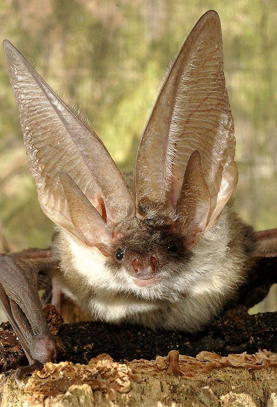 Murciélagos, reyes de los suspiros en el aire