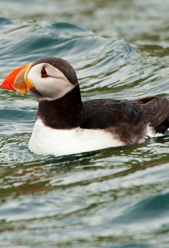 Ciclones y aves marinas: enemigos naturales