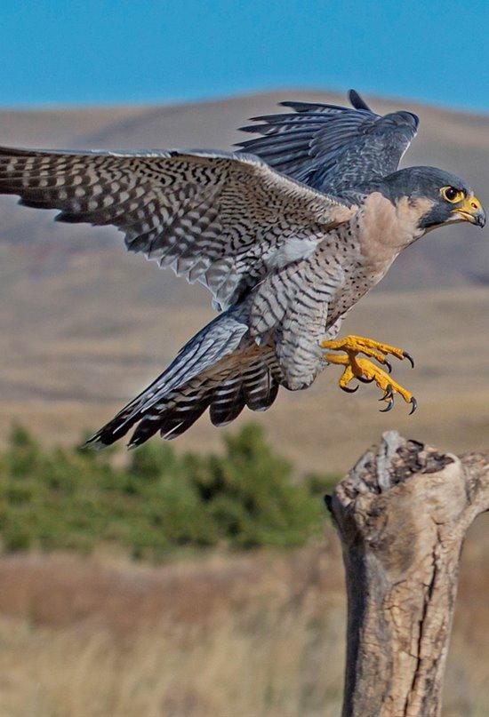 Descubren cómo las aves terrestres realizan sus largas travesías marítimas