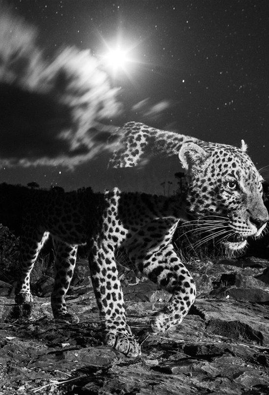 Las fotos más espectaculares del concurso MontPhoto 2021