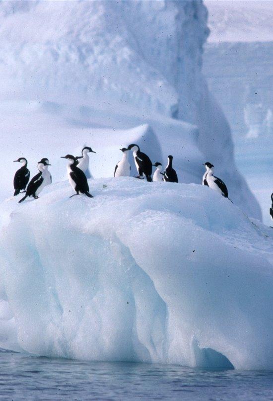La Antártida, protección de un santuario natural