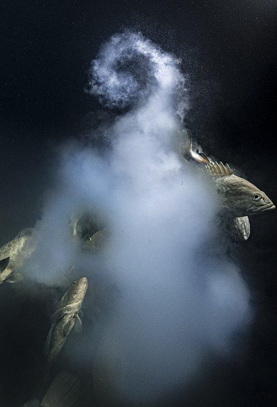 Las mejores fotos de naturaleza del Wildlife Photographer of the Year 2021